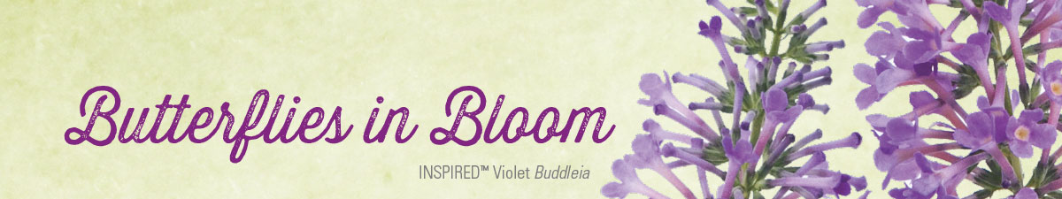 INSPIRED™ Violet Buddleia